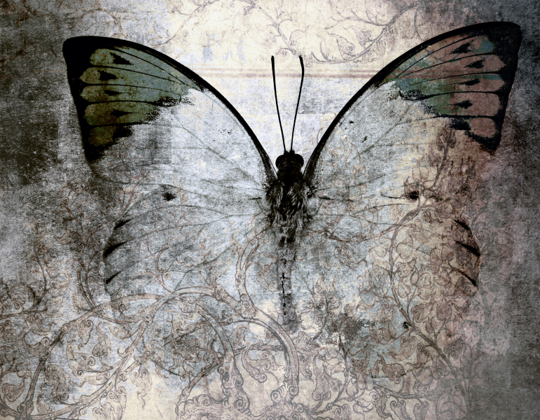 Abstract art - Butterfly Canvas