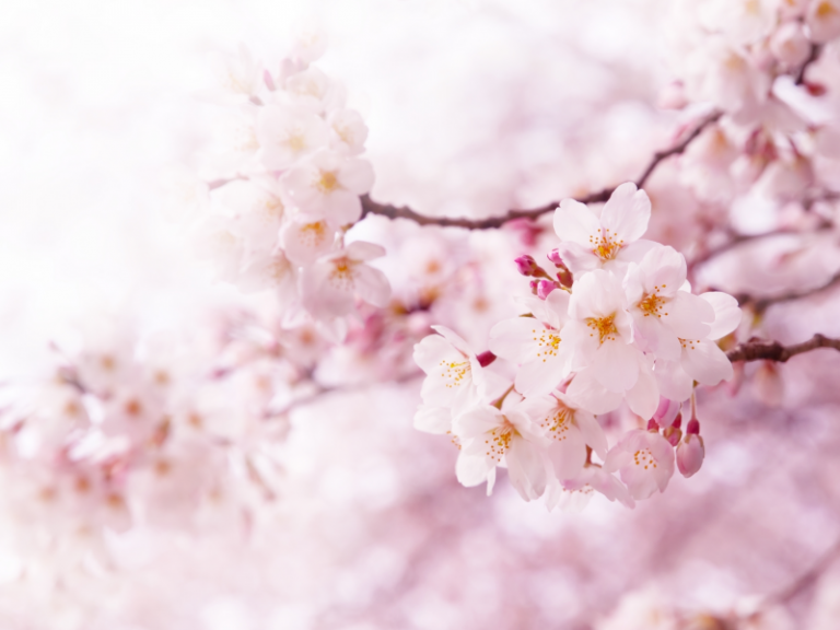Nature art - Blossom
