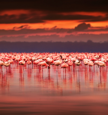 Nature art - Flamingo Paradise