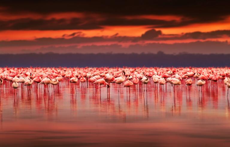 Nature art - Flamingo Paradise
