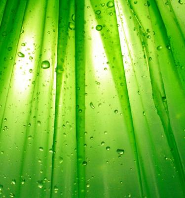 Nature art - Morning Dew