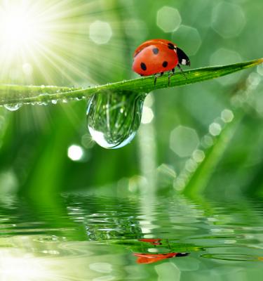 Nature art - Nature's Reflection