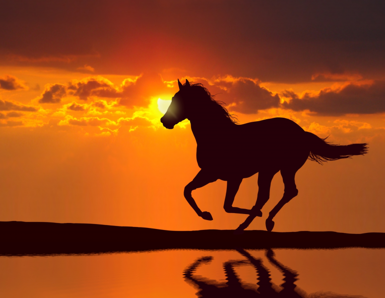 Nature art - Sunset Canter