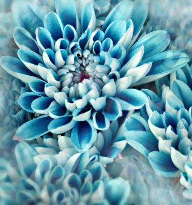 Nature art - Blue Beauty