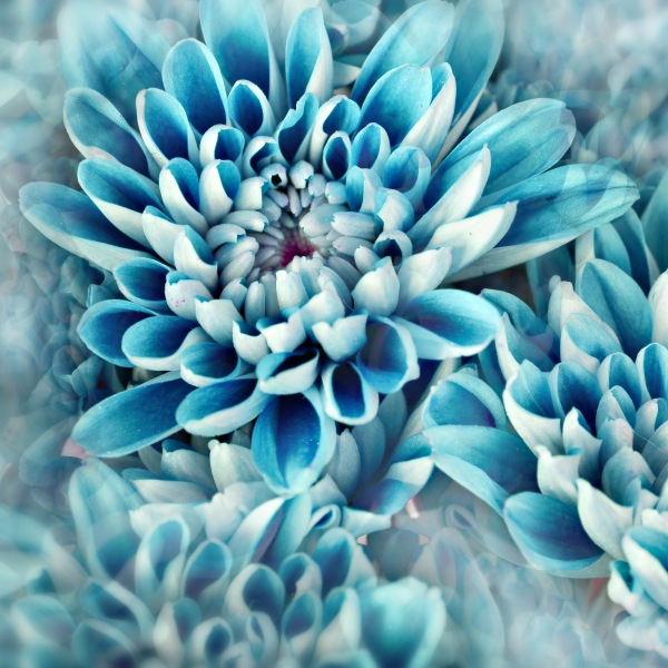 Nature art - Blue Beauty