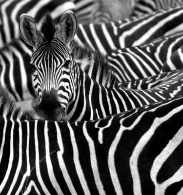 Wildlife art - Spot Me