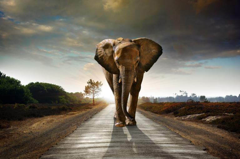 Wildlife art - On the Move