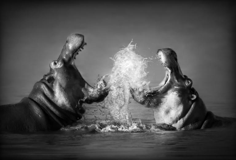 Wildlife art - Battle of Giantss
