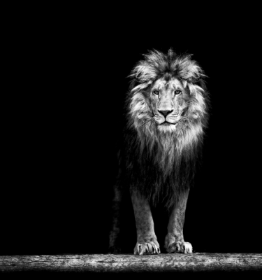 Wildlife art - The King