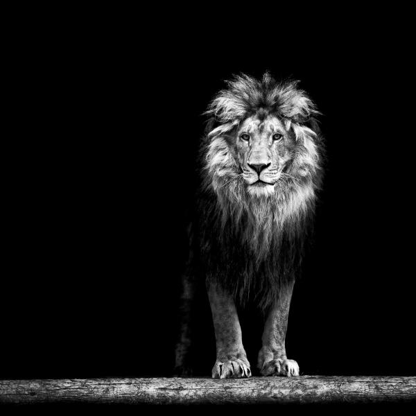 Wildlife art - The King
