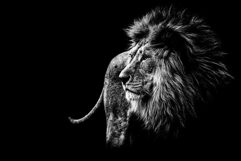 Wildlife art - Impressive
