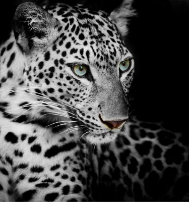 Wildlife art - White beauty