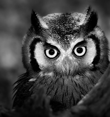 Wildlife art - Smart Eyes