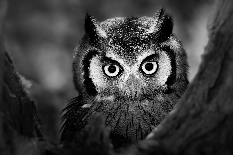 Wildlife art - Smart Eyes