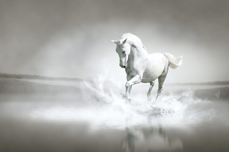 Nature art - Grey beauty