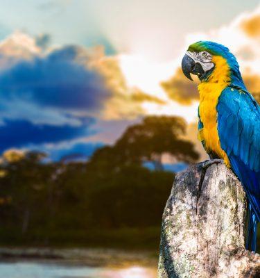 Wildlife art - Rio