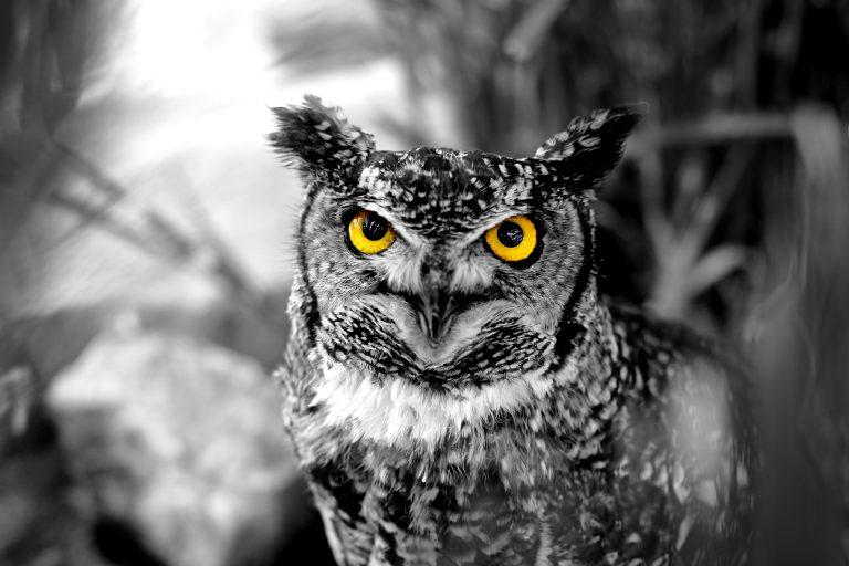 Wildlife art - I see You
