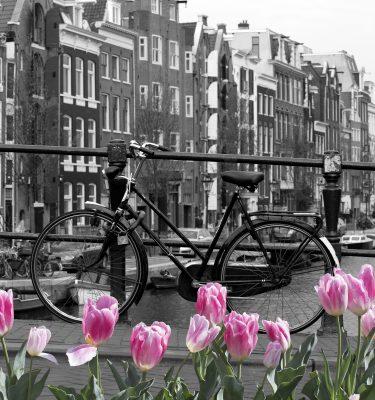 Urban art - Perfect Amsterdam